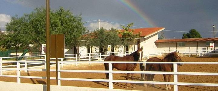 Il campo equestre